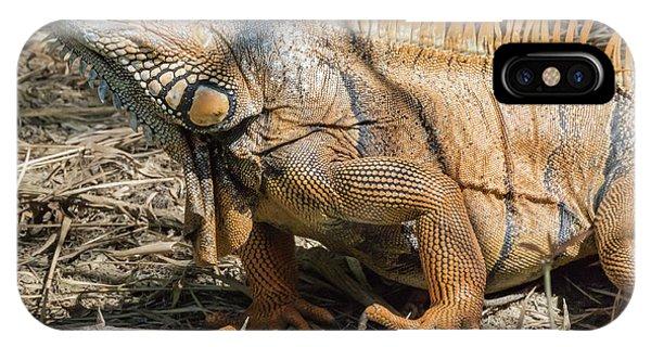 Belize iPhone Case - Male Green Iguana, In Breeding Plumage by William Sutton