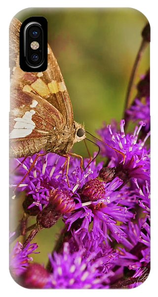 Moth On Purple Flowers IPhone Case
