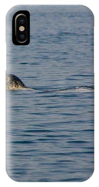 Pacific Harbor Seal IPhone Case