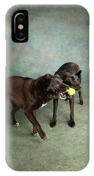 iPhone Case - Portrait Of A Border Collie Mix by Panoramic Images