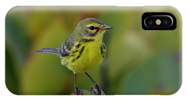 IPhone Case featuring the photograph Prairie Warbler by Thomas Kallmeyer