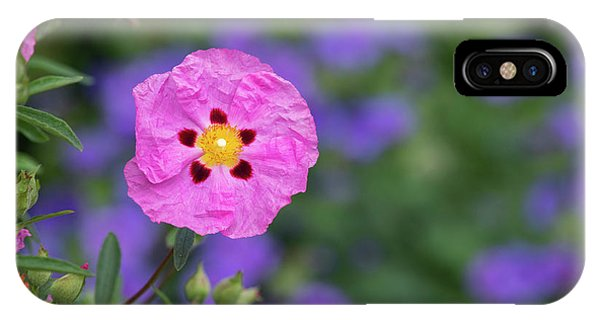 IPhone Case featuring the photograph Purple Flowered Rock Rose by Tim Gainey