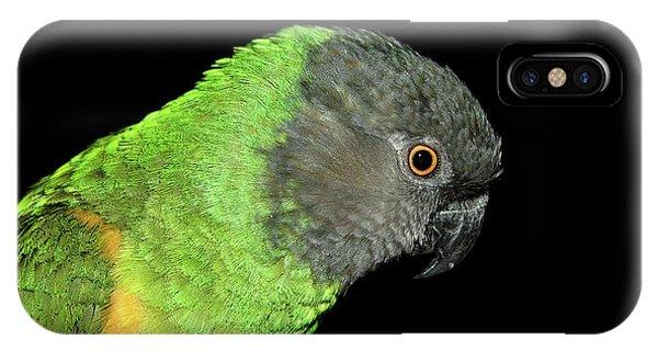 Senegal Parrot IPhone Case