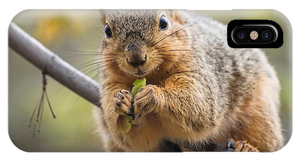 Snacking Squirrel IPhone Case