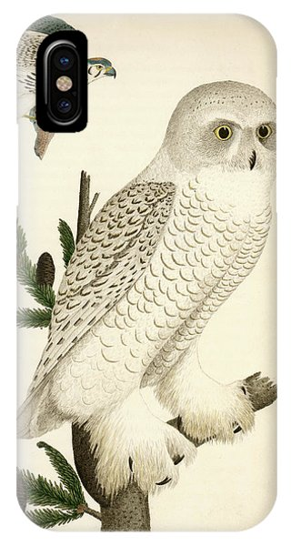 1. Snow Owl. 2. Male Sparrow-hawk. IPhone Case