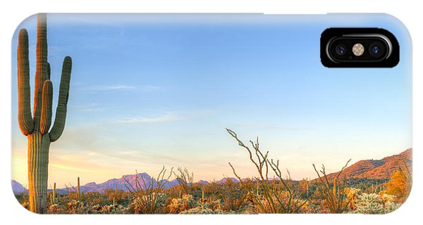 Cacti iPhone Case - Sonoran Desert Catching Days Last Rays by Anton Foltin