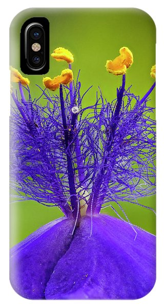 iPhone Case - Spiderwort Flower Close-up, Tradescantia by Adam Jones
