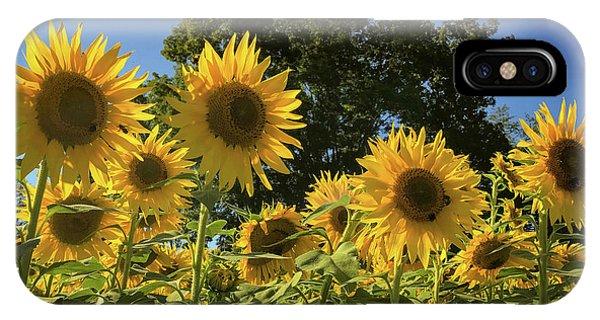 Sunlit Sunflowers IPhone Case