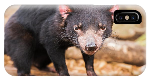 IPhone Case featuring the photograph Tasmanian Devil In Hobart, Tasmania by Rob D