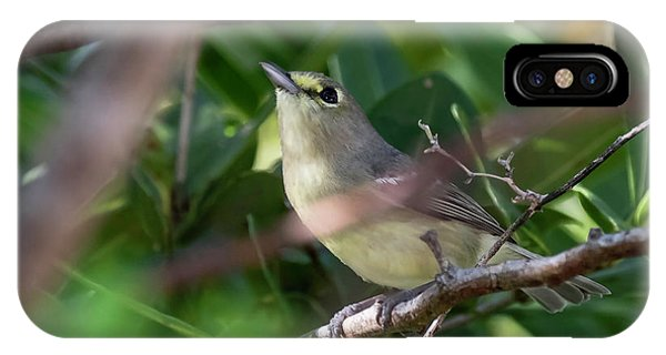 Thick-billed Vireo IPhone Case