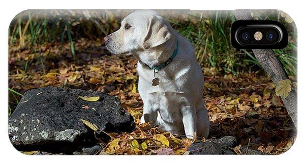 Yellow Labrador Retriever Phone Case by William Mullins