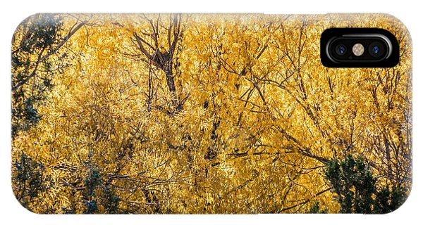 IPhone Case featuring the photograph Autumnal Park. Autumn Trees And Leaves. Fall by Alex Grichenko