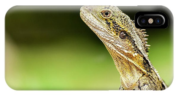 IPhone Case featuring the photograph Eastern Water Dragon Lizard by Rob D Imagery