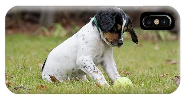 English Setter Puppy, 8 Weeks Phone Case by William Mullins