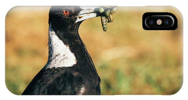 IPhone Case featuring the photograph Australian Magpie Outdoors by Rob D