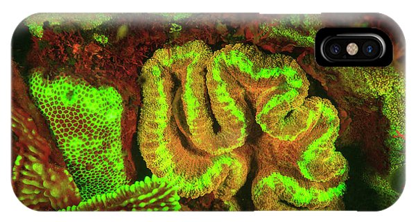 Natural Occurring Fluorescence Phone Case by Stuart Westmorland