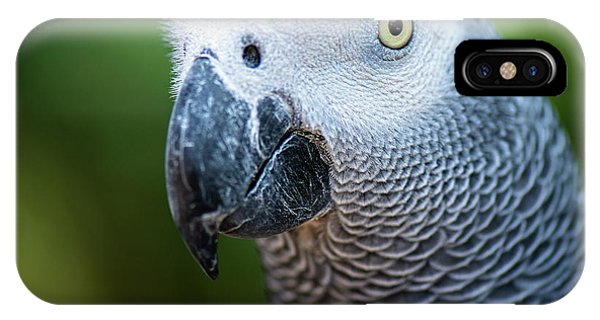 IPhone Case featuring the photograph African Grey Parrot by Rob D Imagery