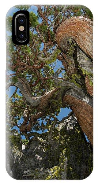 Desolation iPhone Case - Ancient Sierra Juniper Lake Tahoe by Howie Garber