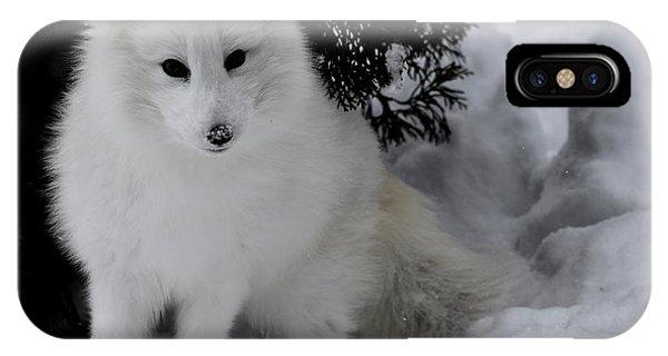 Artic Fox IPhone Case