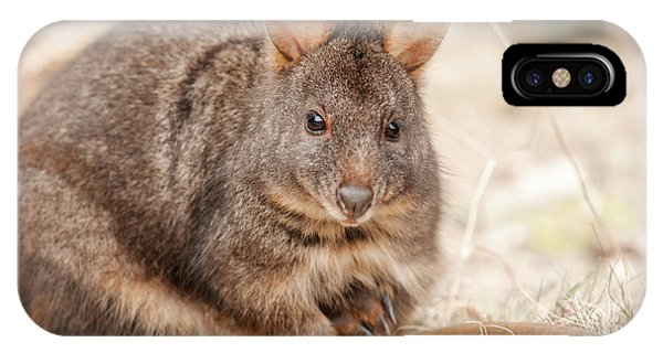 IPhone Case featuring the photograph Australian Bush Wallaby Outside During The Day. by Rob D