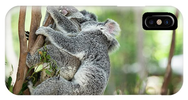 IPhone Case featuring the photograph Australian Koalas by Rob D Imagery