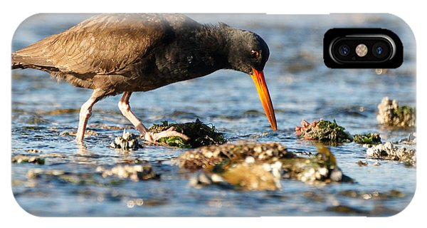 IPhone Case featuring the photograph Black Oystercatcher by Sue Harper