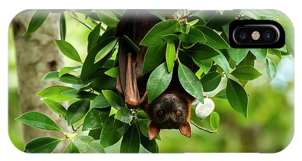 IPhone Case featuring the photograph Flying Fox Bat by Rob D Imagery