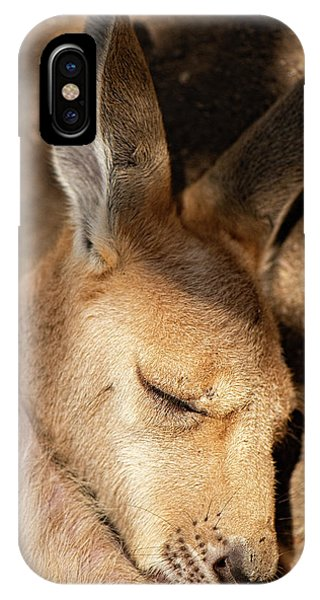 IPhone Case featuring the photograph Kangaroo Joey by Rob D Imagery