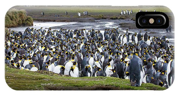 King Penguin Rookery At Salisbury Plain Phone Case by Tom Norring
