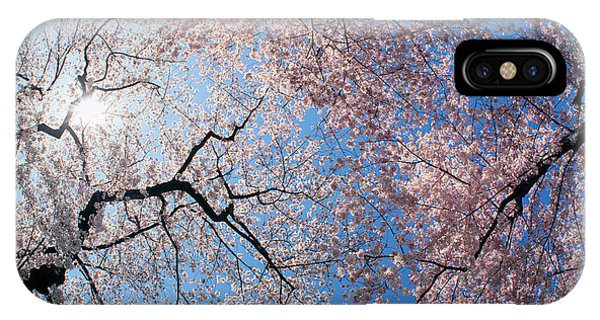 iPhone Case - Low Angle View Of Cherry Blossom Trees by Panoramic Images