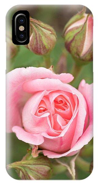 Pink Rose, International Rose Test Phone Case by William Sutton