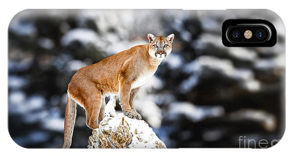Hiking Path iPhone Case - Portrait Of A Cougar, Mountain Lion by Baranov E