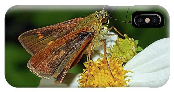Skipper Butterfly IPhone Case