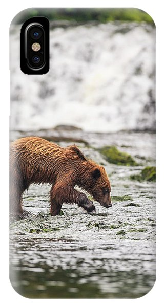 Bear Creek iPhone Case - Young Brown Bear Fishing For Spawning by Stuart Westmorland