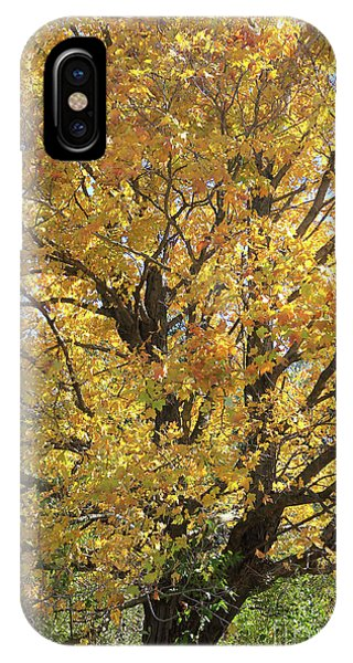 2018 Edna's Tree Up Close IPhone Case