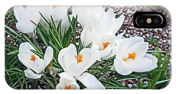 25/03/18  Ramsbottom Chocolate Festival. White Crocuses. IPhone Case