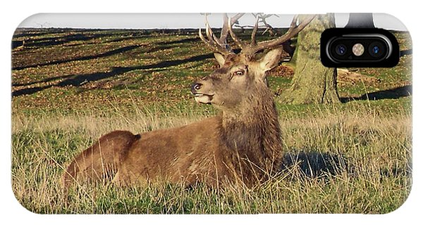28/11/18  Tatton Park. Stag In The Park. IPhone Case