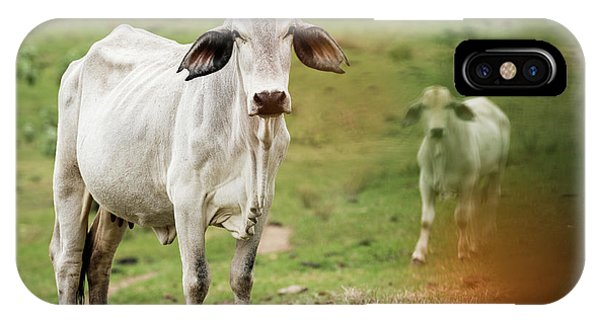 IPhone Case featuring the photograph Australian Cow by Rob D Imagery