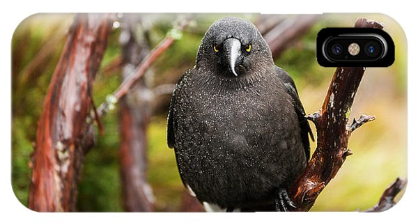 IPhone Case featuring the photograph Black Currawong Resting On A Tree Branch by Rob D