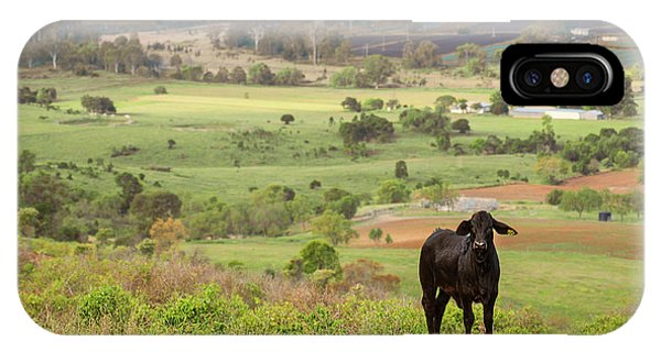 IPhone Case featuring the photograph Cow Outside In The Paddock by Rob D Imagery