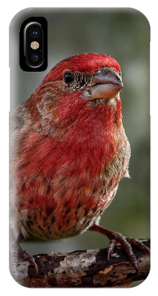 IPhone Case featuring the photograph Finch by Allin Sorenson