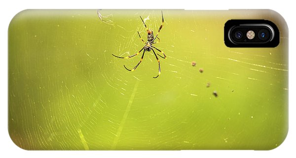 IPhone Case featuring the photograph Golden Orb Spider. by Rob D Imagery
