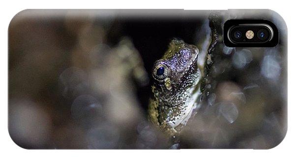 Grey Tree Frog IPhone Case