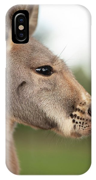 IPhone Case featuring the photograph Kangaroo Outside During The Day Time. by Rob D Imagery