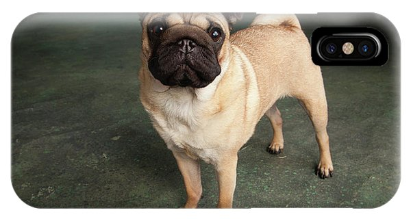Pug iPhone Case - Portrait Of A Pug Mixed Dog by Panoramic Images