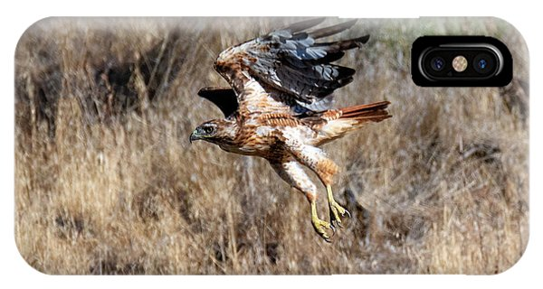 Red Tail Hawk iPhone Case - Talons Down by Mike Dawson