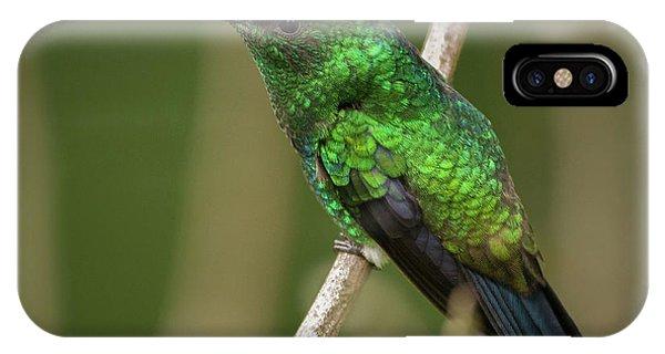Western Emerald Jardin Botanico Del Quindio Calarca Colombia IPhone Case