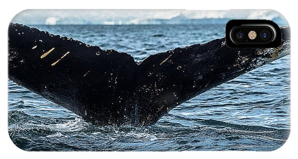 iPhone Case - Whale In The Ocean, Southern Ocean by Panoramic Images