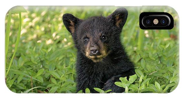 Young Black Bear Cub, Ursus Americanus Phone Case by Adam Jones