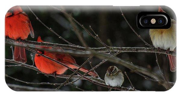 3cardinals And A Sparrow IPhone Case